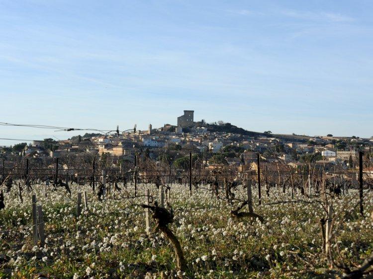 Winter work in the vineyard