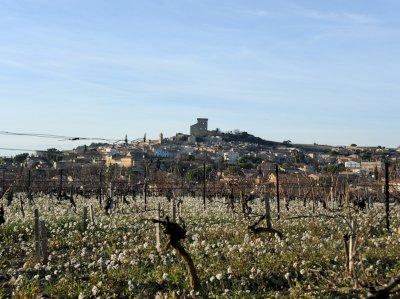 Les travaux d'hiver au vignoble